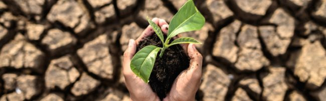 Charla: Sociedad ecosostenible post Covid-19